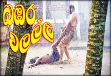 Bambara Walalla Sinhala Movie - Film